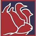 Alimplus logo